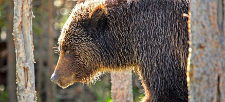 Dr. Brad Johnson: When Bears Attack